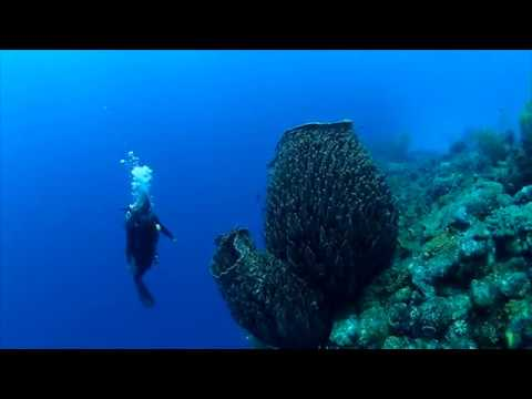 Giant Barrel Sponges Loom Over A Bahama Reef | Science News