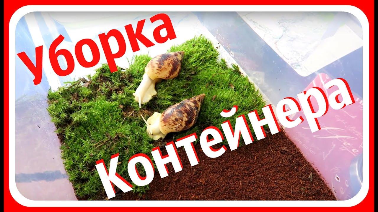 Улитки ахатины и архахатины в украине, киев. 594 likes. Гигантские африканские улитки. Ахатины, архахатины и другие виды сухопутных улиток в.