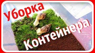 Уборка контейнера улиток Ахатины || Мои улитки Гриша и Степан