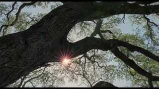 The Cinematography Of Emmanuel Lubezki