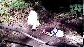 We Visit Little Spooky The Pomeranian At Her New Gravesite.rest In Peace Little Buddy