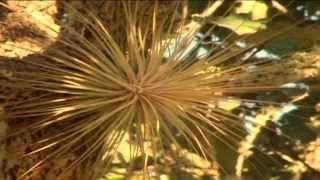 Riqueza Natural de México, Bromelia