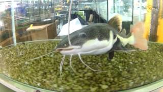 Риба, яку ніколи не з'їдять
