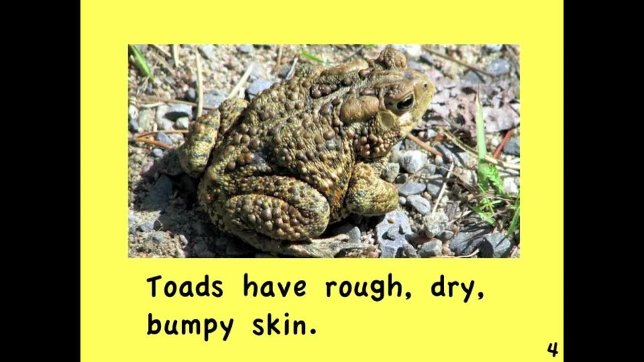 Frogs and toads written by linda zuniga youtube pooptronica Gallery