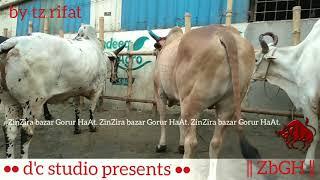 179 | Bolods Lineup | Getting Ready For Eid ul Azha | Sadeeq Agro | ZbGH 2019