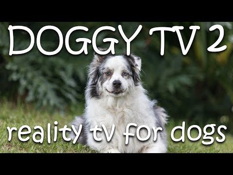 Dog TV 2  - (Reality TV for Dogs)