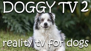 Dog TV 2  - (Reality TV for Dogs)  Please Subscribe