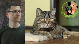 17.08.19  Ветеринар и кот Сэмыч в прямом эфире отвечаем на вопросы о собаках и кошках