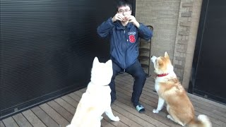 犬用バームクーヘンでお手の特訓。