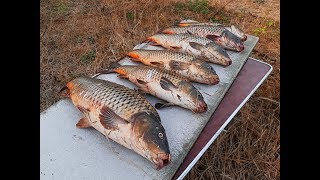Сазан ломает сторожки  Рыбалка в Гандурино Полдневое 07 09 19
