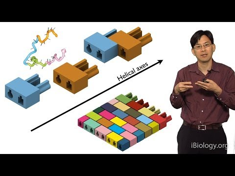 William Shih (Harvard) Part 2: Nanofabrication via DNA Single Stranded Bricks