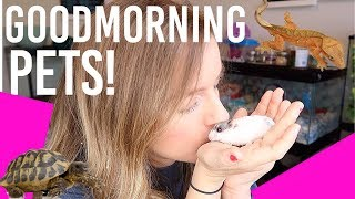 morning pet routine small animals reptiles