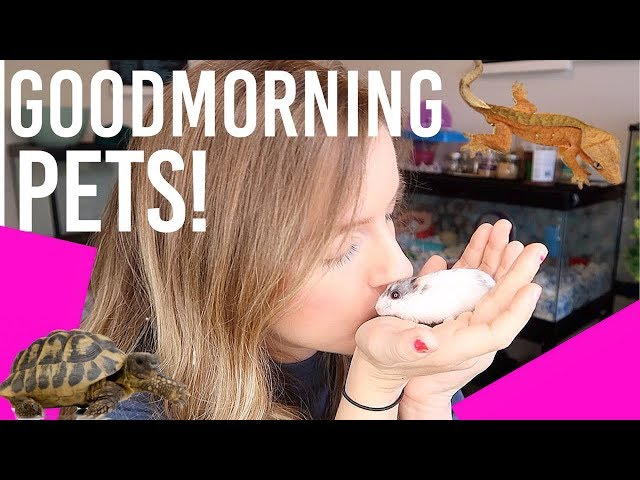 MORNING PET ROUTINE | Small Animals & Reptiles