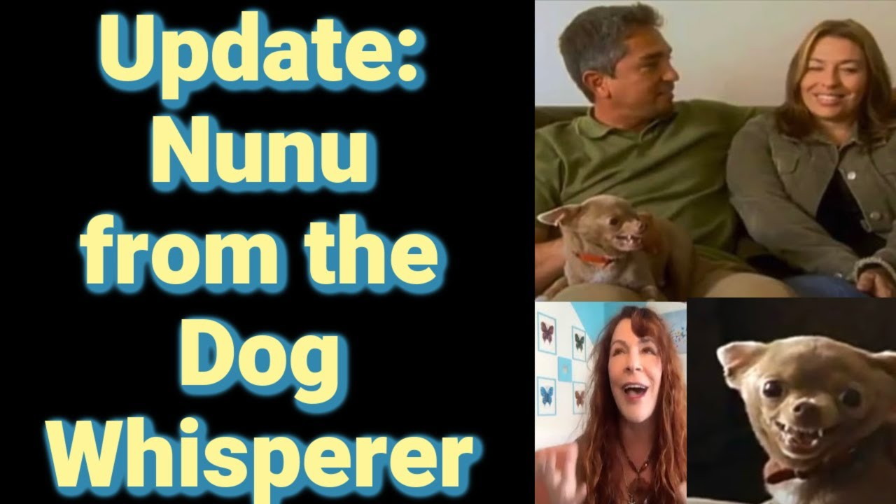 Interview:Lessons from Animals & The Universe.Dog Whisperer Update:Nunu