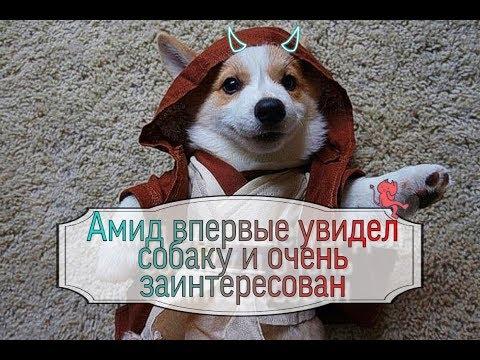 Амид интересуется собаками и другими животными у Аркадия ОрловаЯкова Брюса