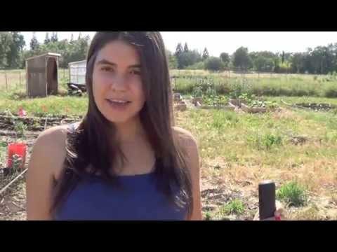 How To Start A Garden From Scratch: Summer Gardening Video Series: Part 1