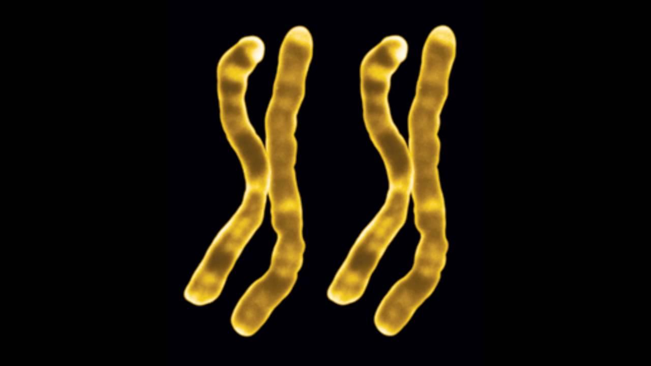 female chromosome