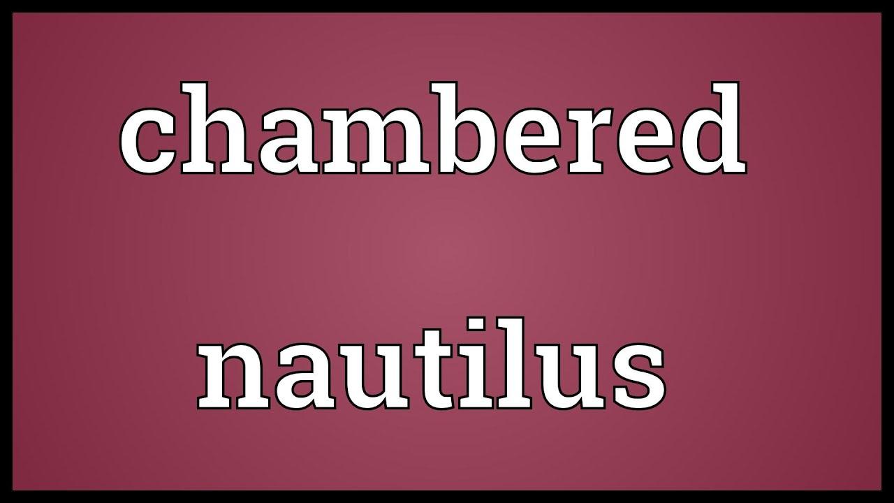 the chambered nautilus analysis