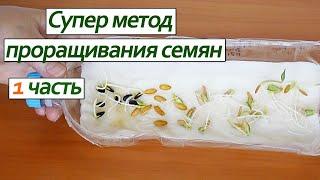 Проращивание семян на бумаге супер метод /Sprouting seeds super paper method