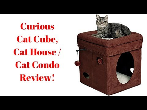 curious-cat-cube,cat-house/cat-condo-review!