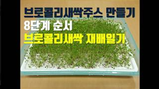 브로콜리새싹주스 만들기 8단계 순서(브로콜리새싹 수경재…