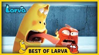 larva  best of larva  funny cartoons for kids  cartoons for children  larva 2017 week 39