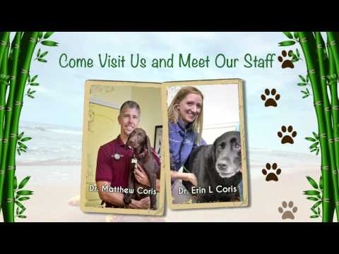 Meet the Staff at Island Animal Hospital in Merritt Island, Viera, and Cocoa Beach