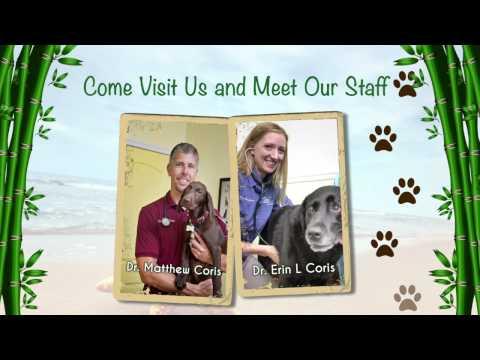 Meet the Staff at Island Animal Hospital in Merritt Island, Viera, and Cocoa Beach