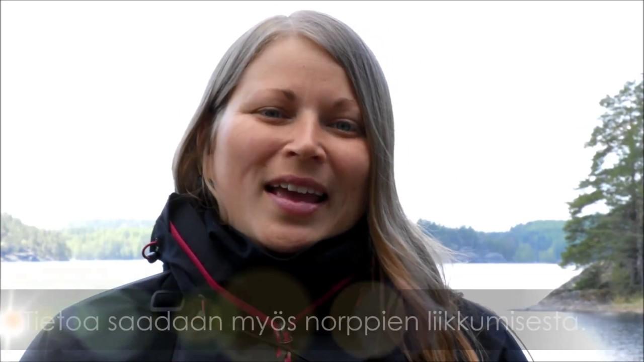 Meeri Koivuniemi