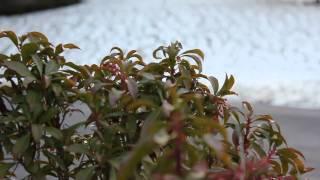 Canon EOS Rebel T2i full HD video test #1 - 24fps -