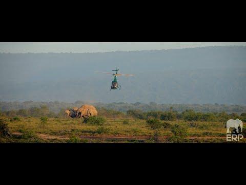 A Conservation Milestone - ERP Relocates Elephants to Samara (The Great Karoo)