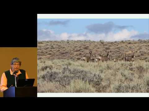 Understanding Climate Adaptation Strategies