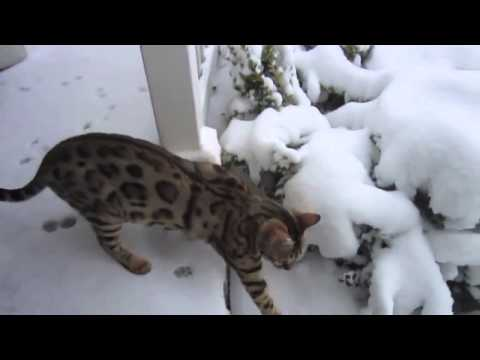 Cats see snow for the first time