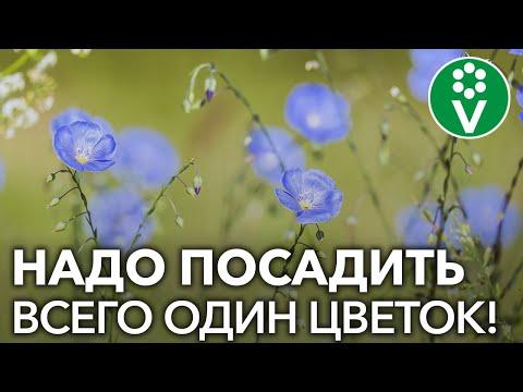 Вопрос: Когда садоводы РФ поставят крест над колорадским жуком?