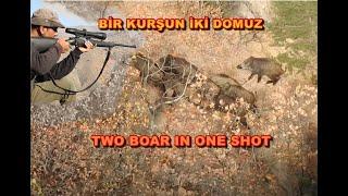 Two Boars In One Shot / Tek Atışta İki Yaban Domuzu Vuruluyor.