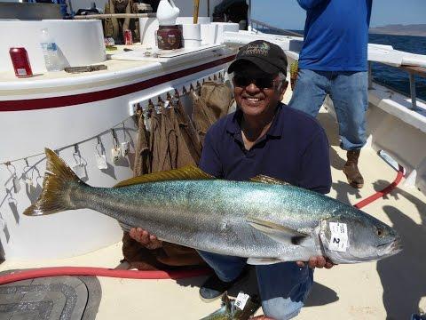 Pacific Dawn Sportfishing - June 6th 2015 Santa Rosa Island