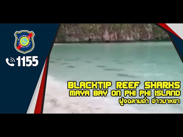 อ่าวมาหยา | ฝูงฉลามดำ | Blacktip reef sharks | Maya Bay on Phi Phi Island | 17 ต.ค.61