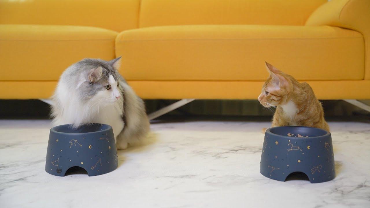 고양이도 남의 떡이 더 커보이나봐요 ㅎㅎ