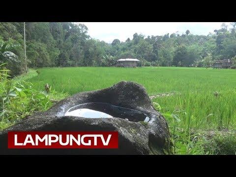 Saksi Bisu Kehadiran Seorang Bidadari di Lampung Barat