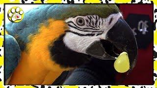 Вся ПРАВДА о ЦИРКЕ попугай АРА 🐦🐦🐦