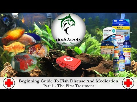 Beginning Guide To Fish Disease & Medication - Part 1 - Bacterial Disease