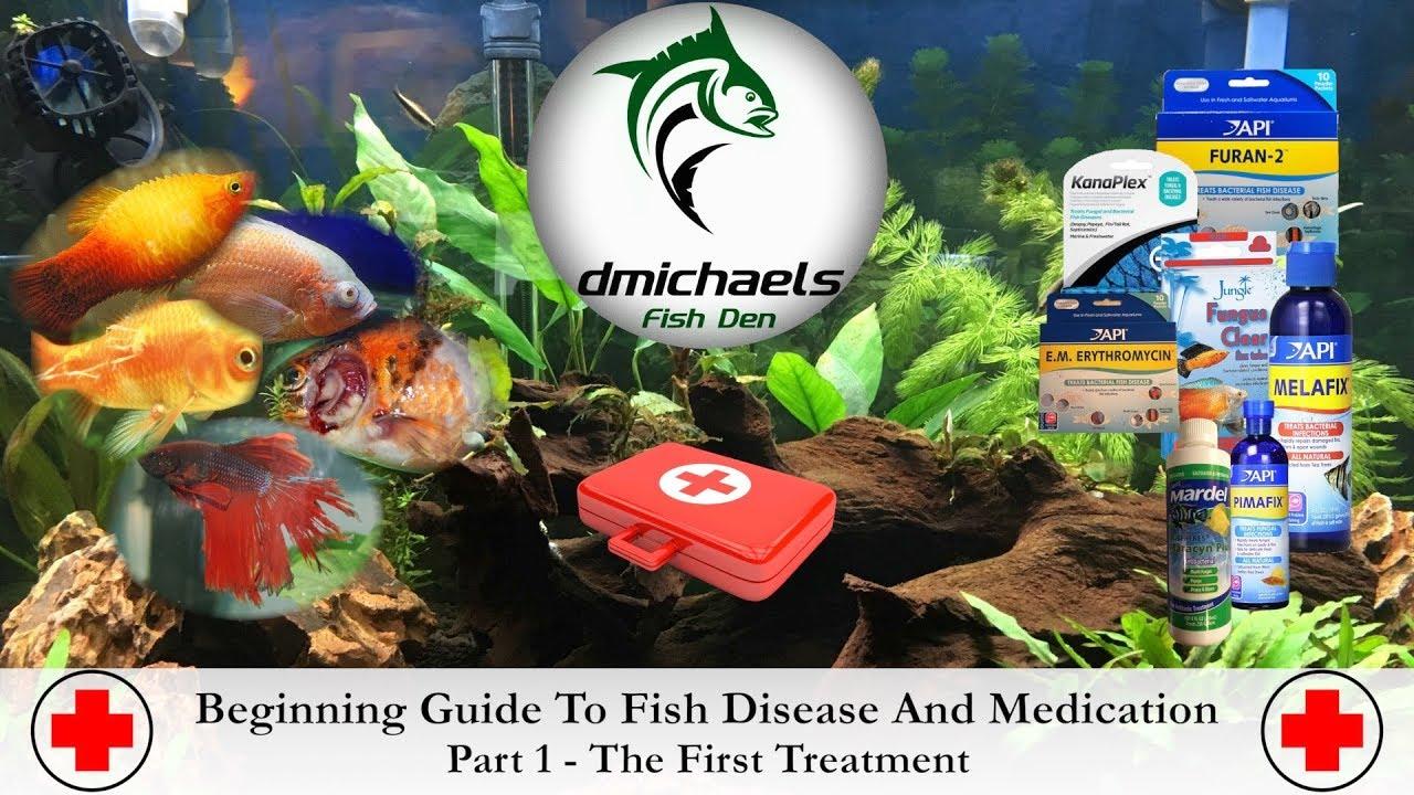 Beginning Guide To Fish Disease & Medication - Part 1 - Bacterial Disease - YouTube