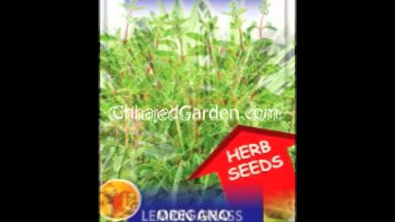 Buy herbs online - Buy Herb Seeds Herbs Seeds Online In India Herbs Seeds Online Edible Herbs Seeds