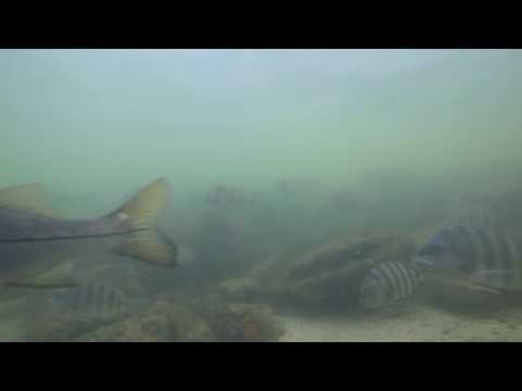 Waters of Port Manatee 12 23 2016