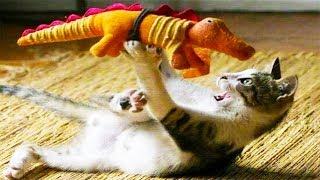 Haha… You Will CRY LAUGHING After Watching This, SUPER Funny & Crazy Cats Videos, Animals TV