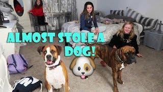 WE ALMOST STOLE A DOG 🐶 (WK 358.3)   Bratayley