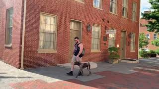 Gus   6 Month Old German Shorthaired Pointer   GSP   Off Leash K9   Basic Obedience   Dog Training