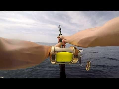 MAHI 2018 DOCK RECORD! (Montauk Shark Fishing)