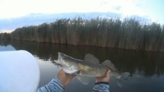 Fishing Рибалка . Гума - Судак - Червень 2017 Ростовська область . нове місце .1-е відвідування