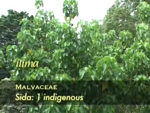 An Introduction to the Ethnobotany of the Canoe Plants